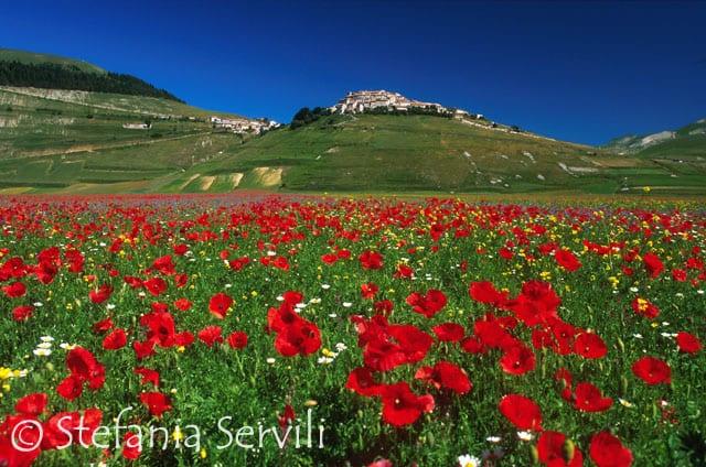 fioritura a Castelluccio