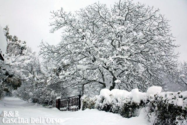 Giardino in inverno